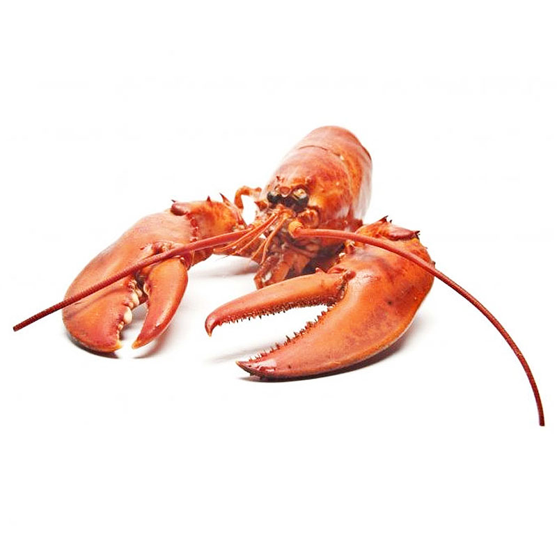 Lobster image
