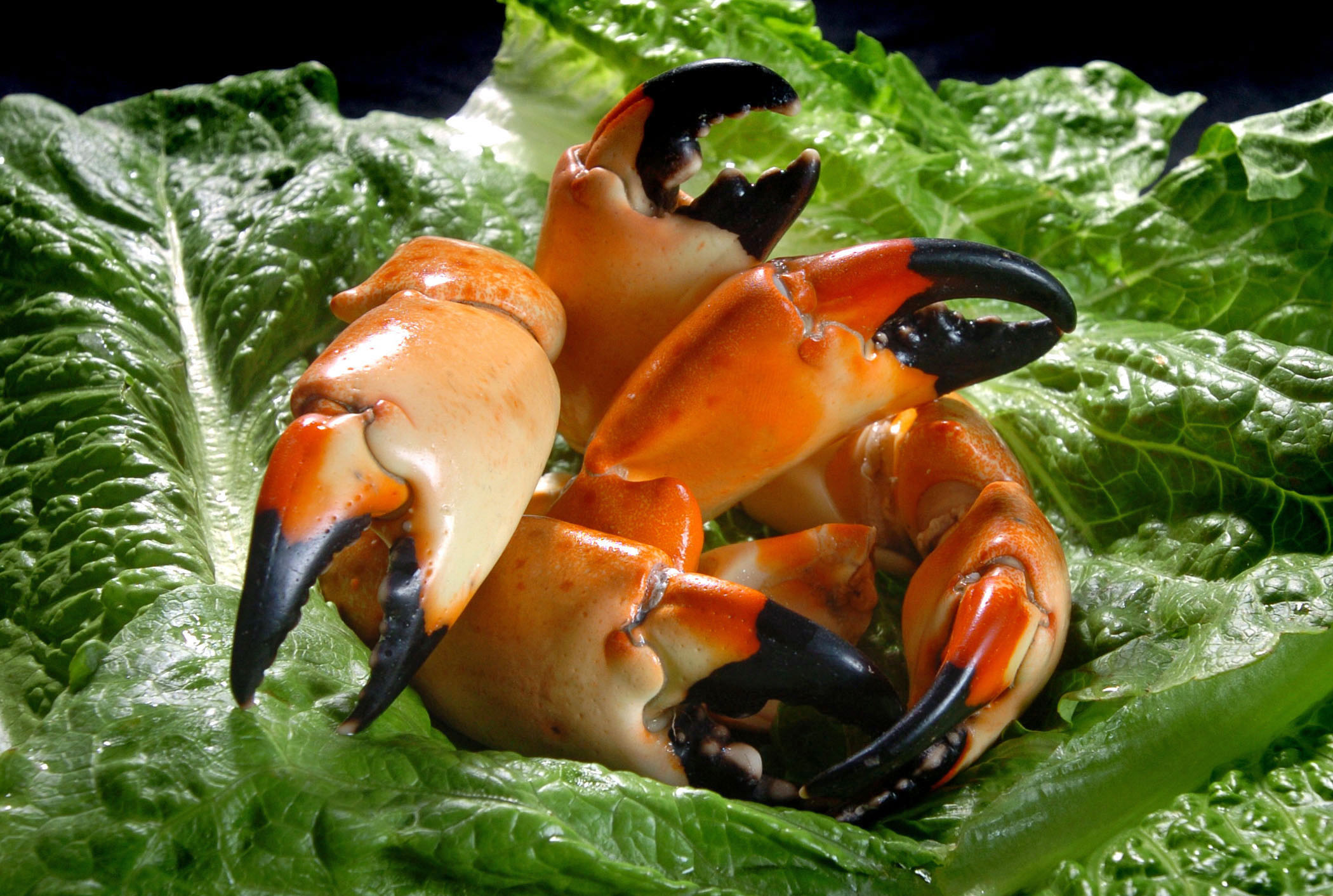 Cooked Crab Claws image