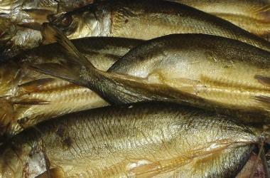 Smoked Fish art