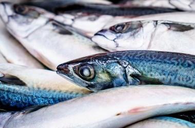 Fresh Fish art